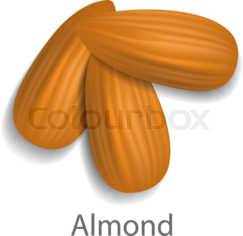 800x774 Almond Mockup. Realistic Illustration Of Almond Vector Mockup For