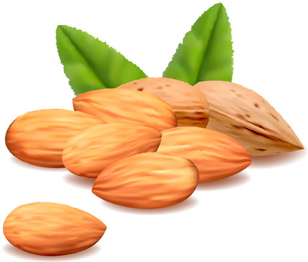 432x368 Almond Nut Vector Free Vector Download (137 Free Vector) For
