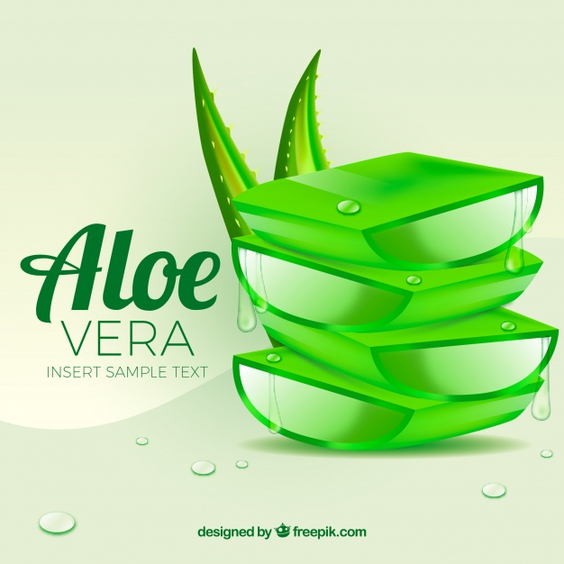 626x626 Aloe Vera Background Vector Free Download
