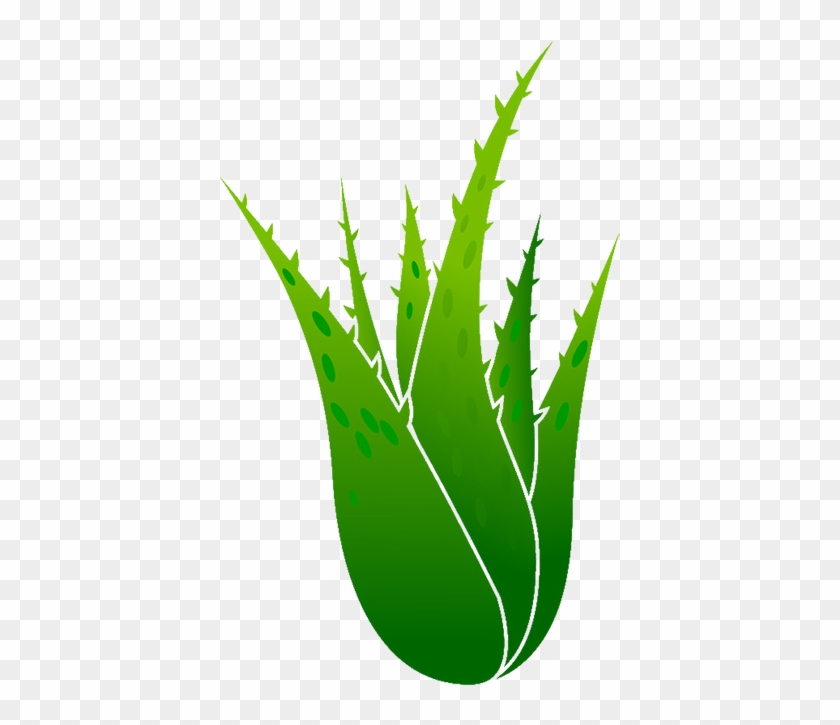 840x725 Aloe Vera Euclidean Vector Plant Illustration