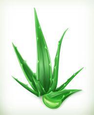192x235 Vector Aloe Vera Fonts Logos Icons Aloe, Mockup
