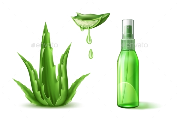 590x400 Vector Aloe Vera By Iwhitewings Graphicriver
