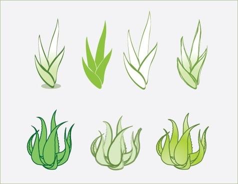 476x368 Vector Aloe Vera Plant Free Vector Download (4,434 Free Vector