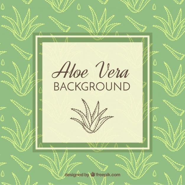 626x626 Aloe Vera Vectors, Photos And Psd Files Free Download