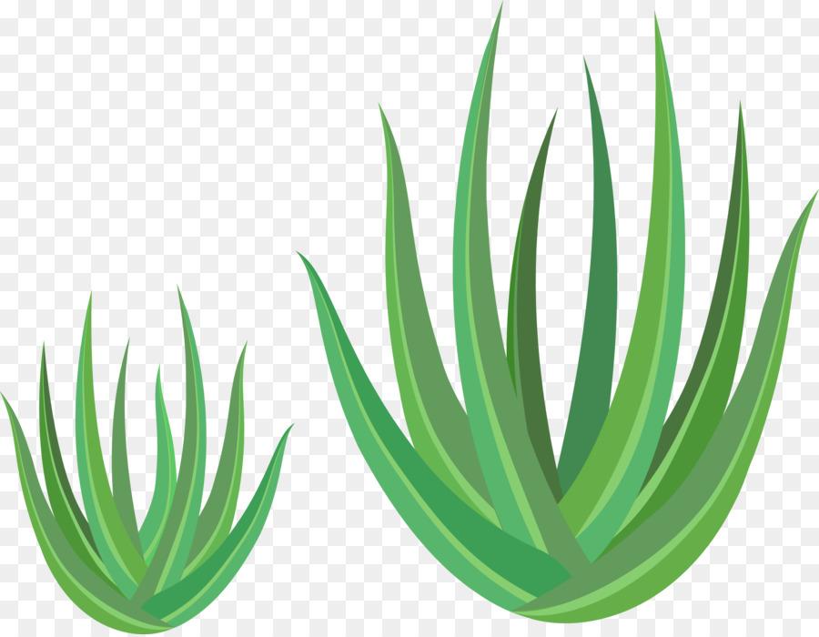 900x700 Aloe Vera Euclidean Vector Green