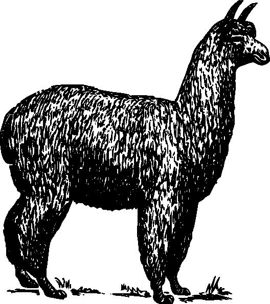 528x594 Alpaca Clip Art Free Vector 4vector