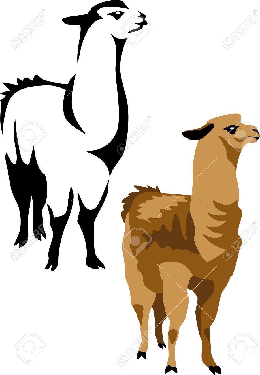 902x1300 Alpaca Clipart Vector ~ Frames ~ Illustrations ~ Hd Images ~ Photo