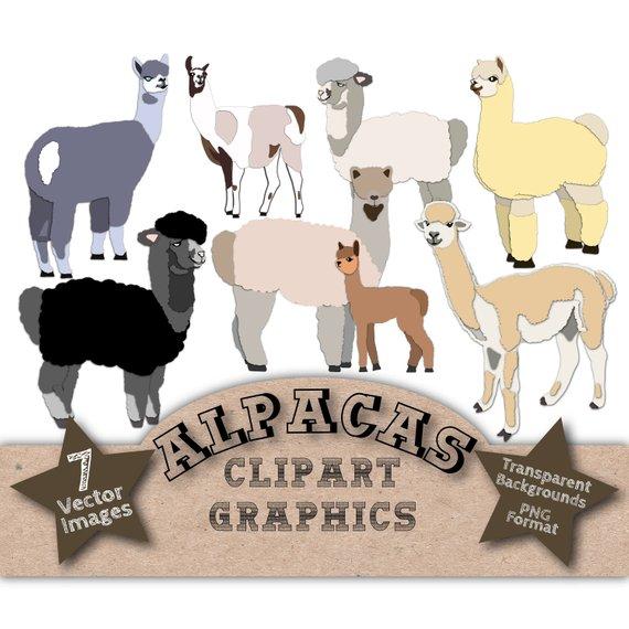 570x570 Alpaca Clip Art Clipart Alpacas Alpaca Vectors Alpaca Etsy