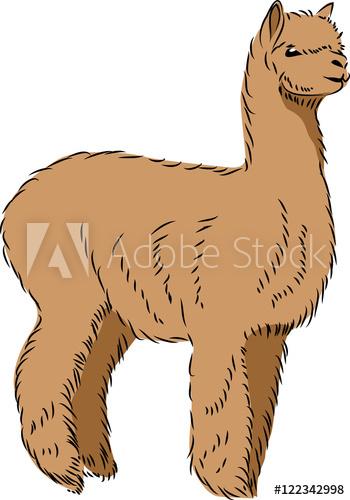 350x500 Llama Alpaca