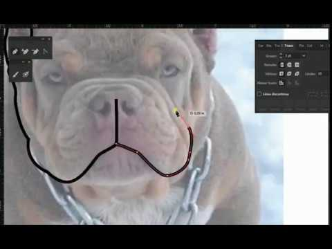 American Bully Vector at GetDrawings com | Free for personal