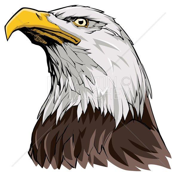 590x590 Bald Eagle