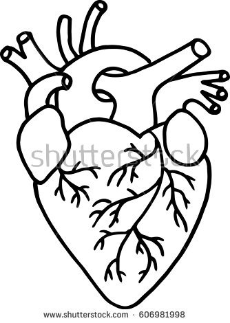 334x470 Collection Of Human Heart Clipart Black And White High