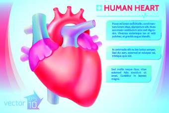340x227 Human Heart Vector Free Vector Download (6,702 Free Vector) For