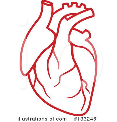 400x420 Anatomy Clipart Anatomical Heart