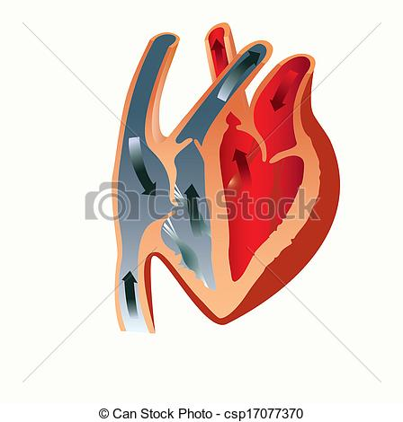 448x470 Grant To Study The Anatomy Of The Heart.