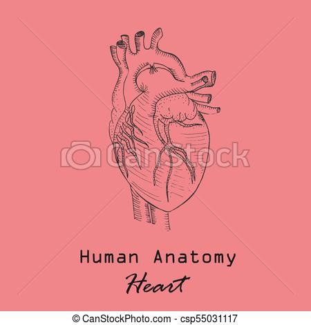 450x470 Handdrawn Human Heart On The Color Background With The Inscription