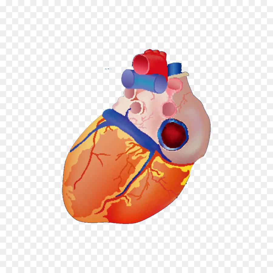 900x900 Heart Euclidean Vector Anatomy Illustration