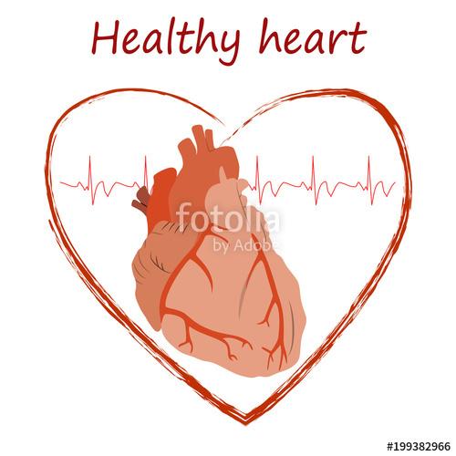 500x500 Heart Health Poster, Banner, Design Template. Anatomy Heart Image