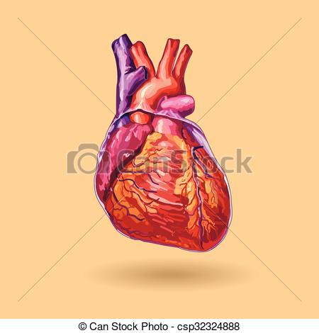 450x470 Human Heart Vector . Realistic Illustration. No Trace.