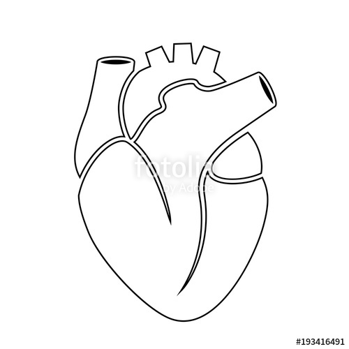 500x500 Outline Icon Of Human Heart Anatomy Stock Image And Royalty Free
