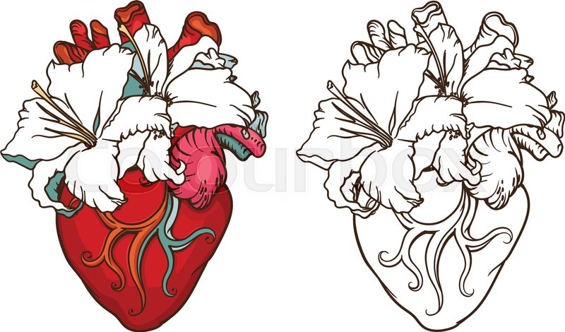 800x470 Stylized Anatomical Human Heart Drawing. Heart With White Lilies
