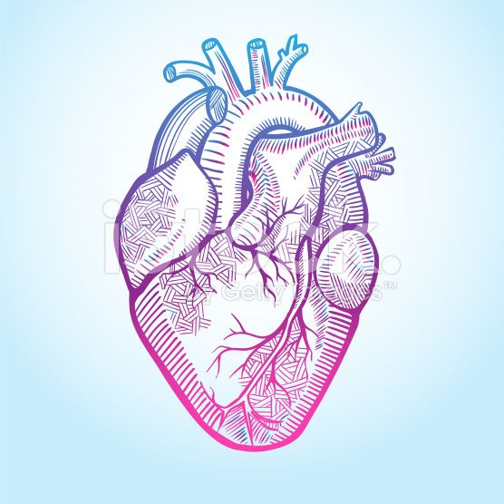 556x556 The Human Heart With The Arteries, Made In Graphic Style With