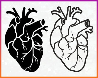 340x270 Anatomical Heart Svg Etsy