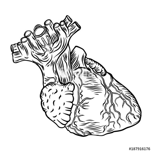 500x500 Anatomical Heart. Hand Drawn Flash Tattoo Concept Of Anatomy Heart