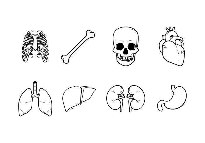 700x490 Human Anatomy Free Vector Art