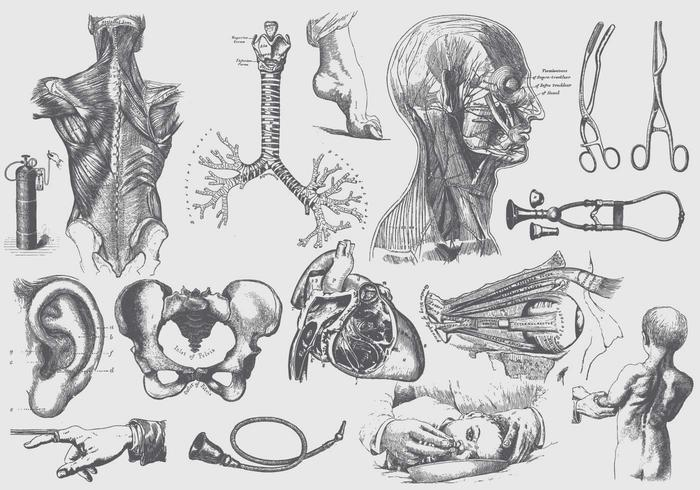 700x490 Anatomy Free Vector Art