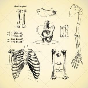 304x304 Sketch Anatomy Human Bone Vectors