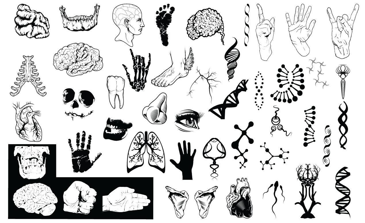 1270x778 Anatomy Vector Pack For Adobe Illustrator