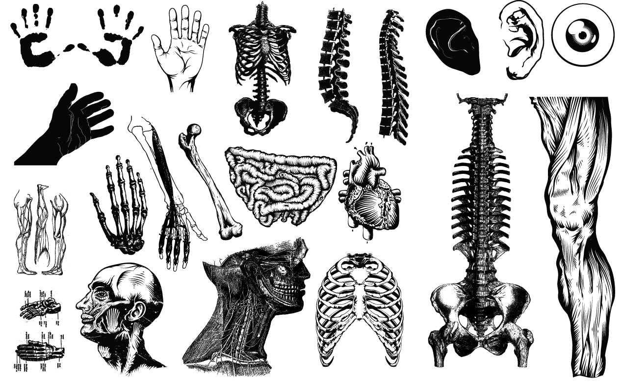 1270x778 Anatomy Vector Pack
