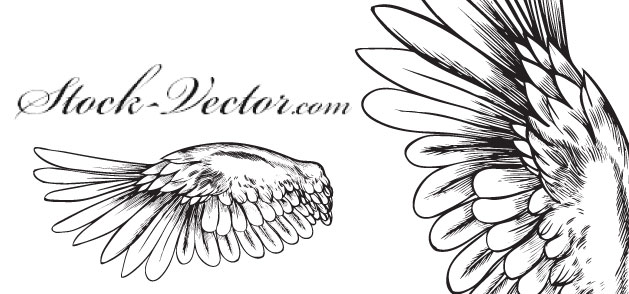 Angel Wings Vector Free Download