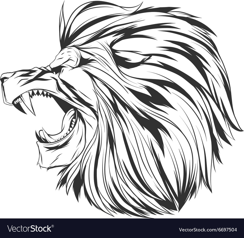 1000x973 Angry Lion Face Sketch Angry Lion Head Royalty Free Vector Image