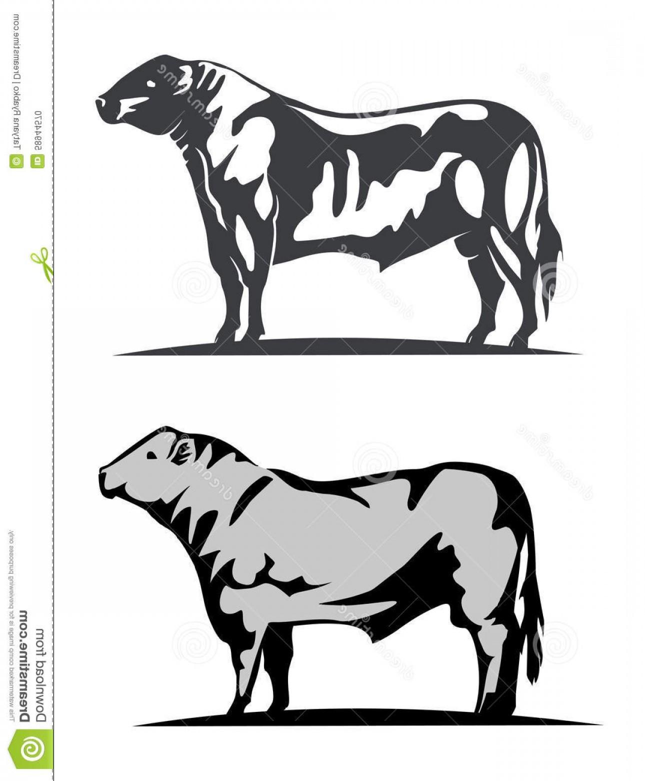 1290x1560 Angus Cow Vector Art Lazttweet