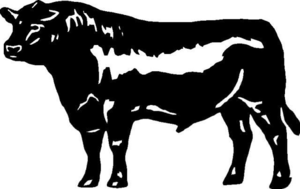 300x189 Angus Steer Clipart Free Images