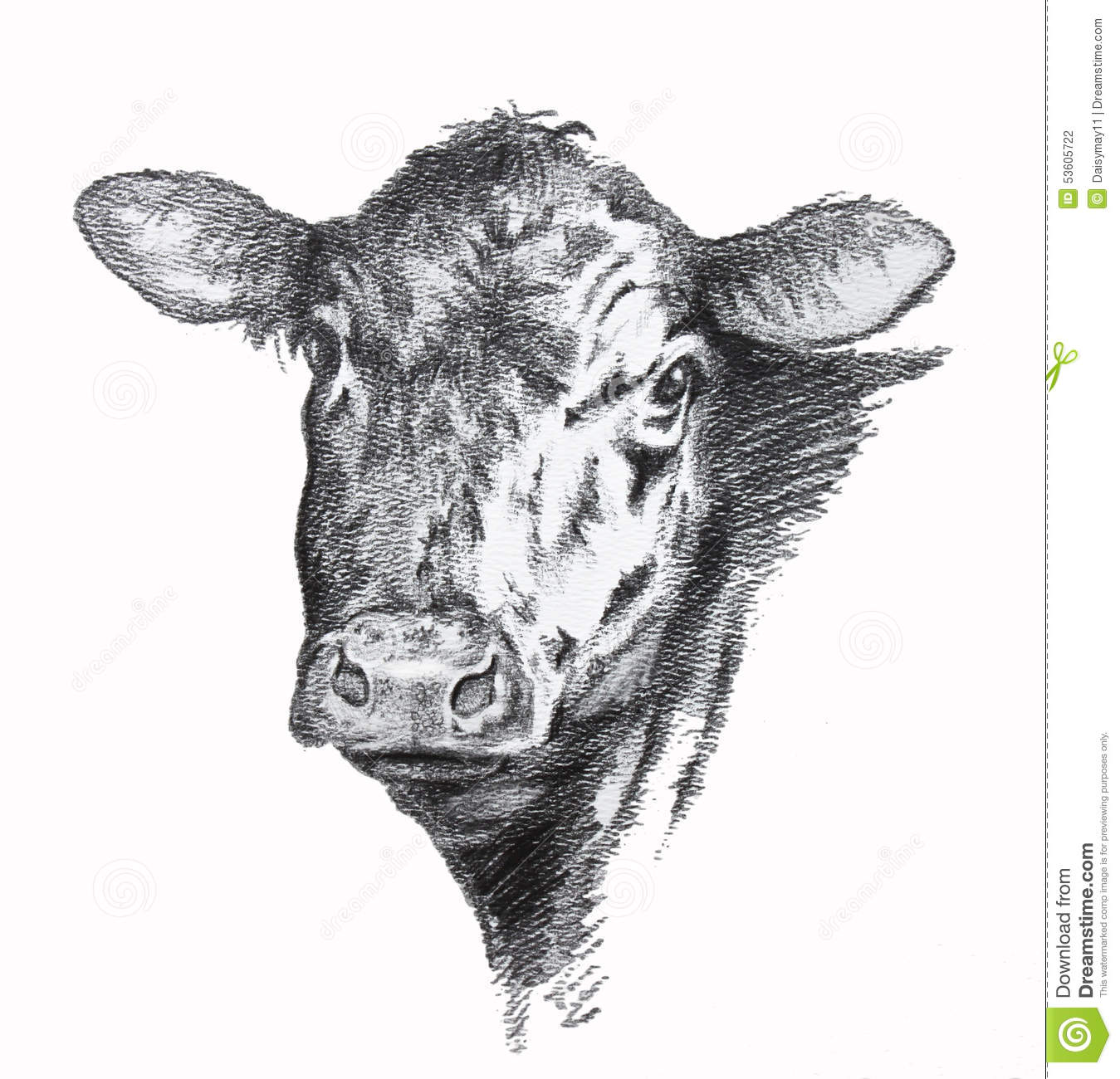 1349x1300 Collection Of Black Angus Drawing High Quality, Free