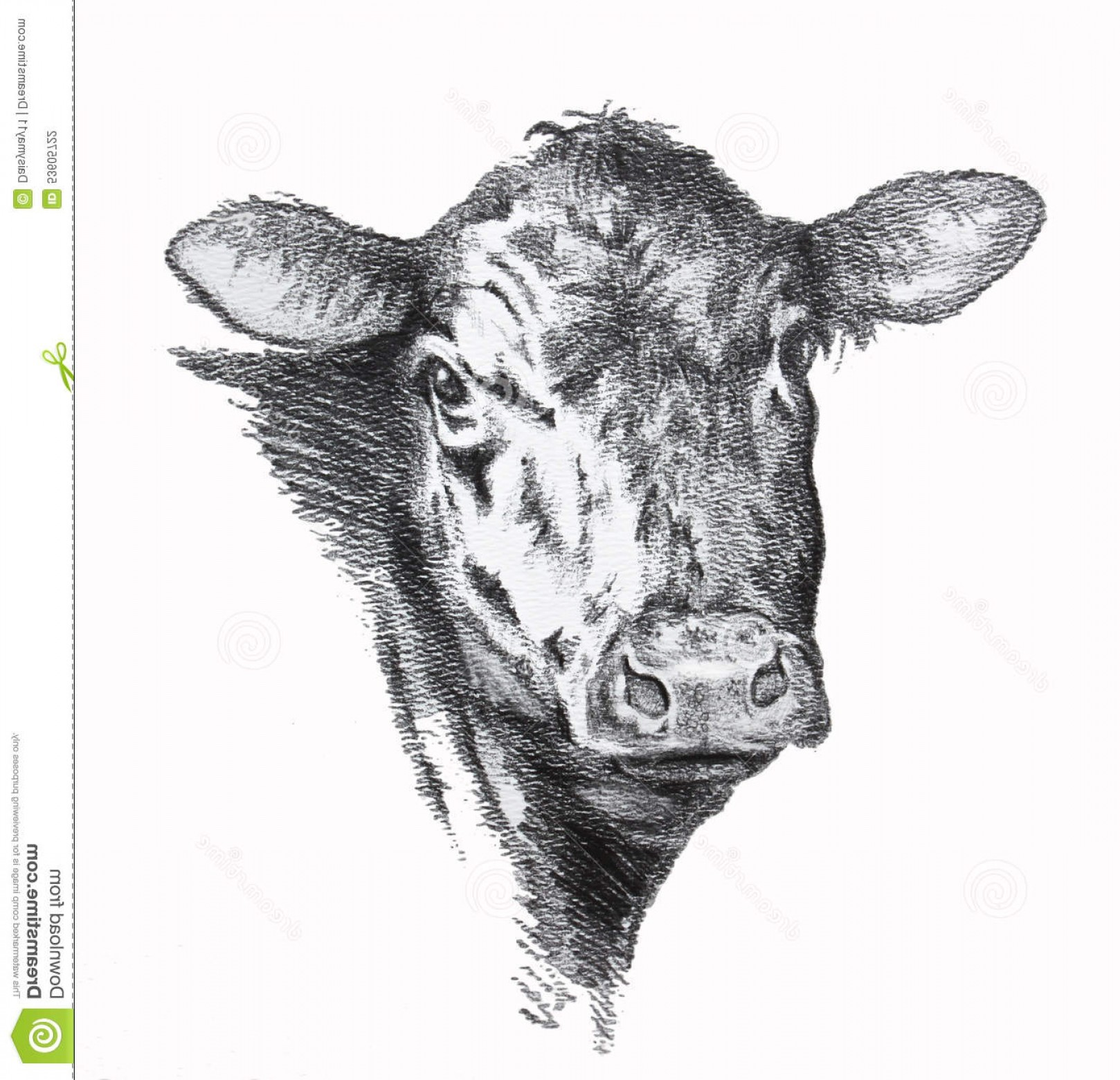 1618x1560 Stock Illustration Cow Pencil Drawing Black Angus Beef Image Arenawp
