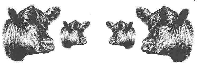 749x241 Angus Clip Art