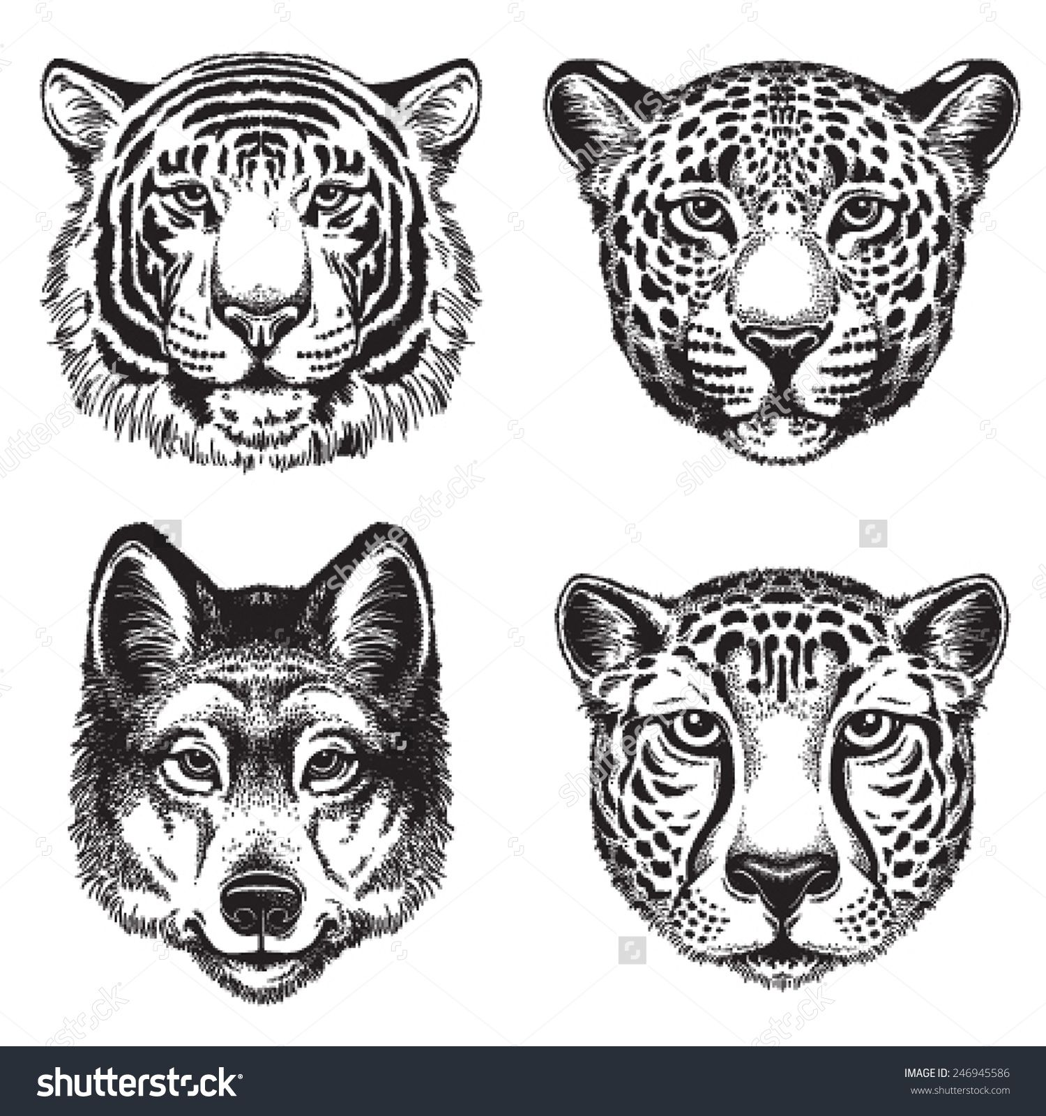 1500x1600 Black And White Vector Line Drawings Of Wild Animal Faces Cheetah