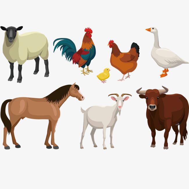 650x651 Farm Animal Vector Illustration, Animal Clipart, Animal, Farm Png