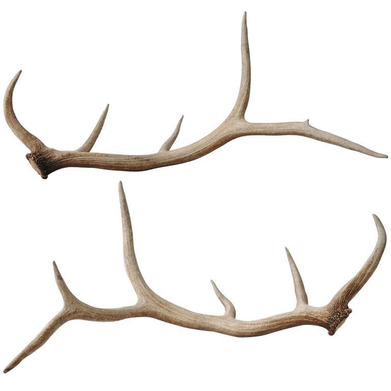768x768 Antler Clipart Elk Antler