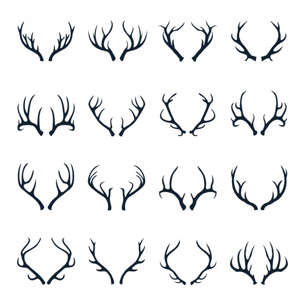 626x626 Antler Vectors, Photos And Psd Files Free Download