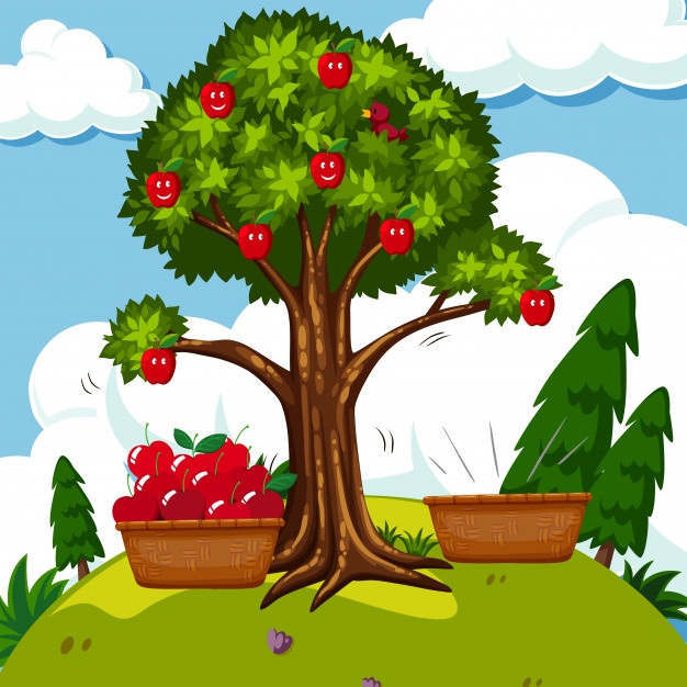 626x626 Apple Tree Vectors, Photos And Psd Files Free Download