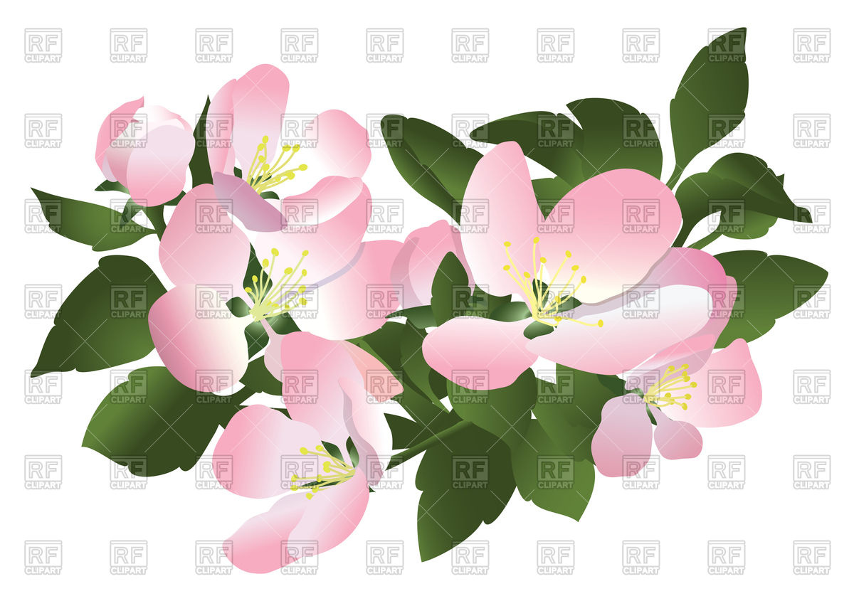 1200x845 Flowers Of Apple Tree Vector Image Vector Artwork Of Signs