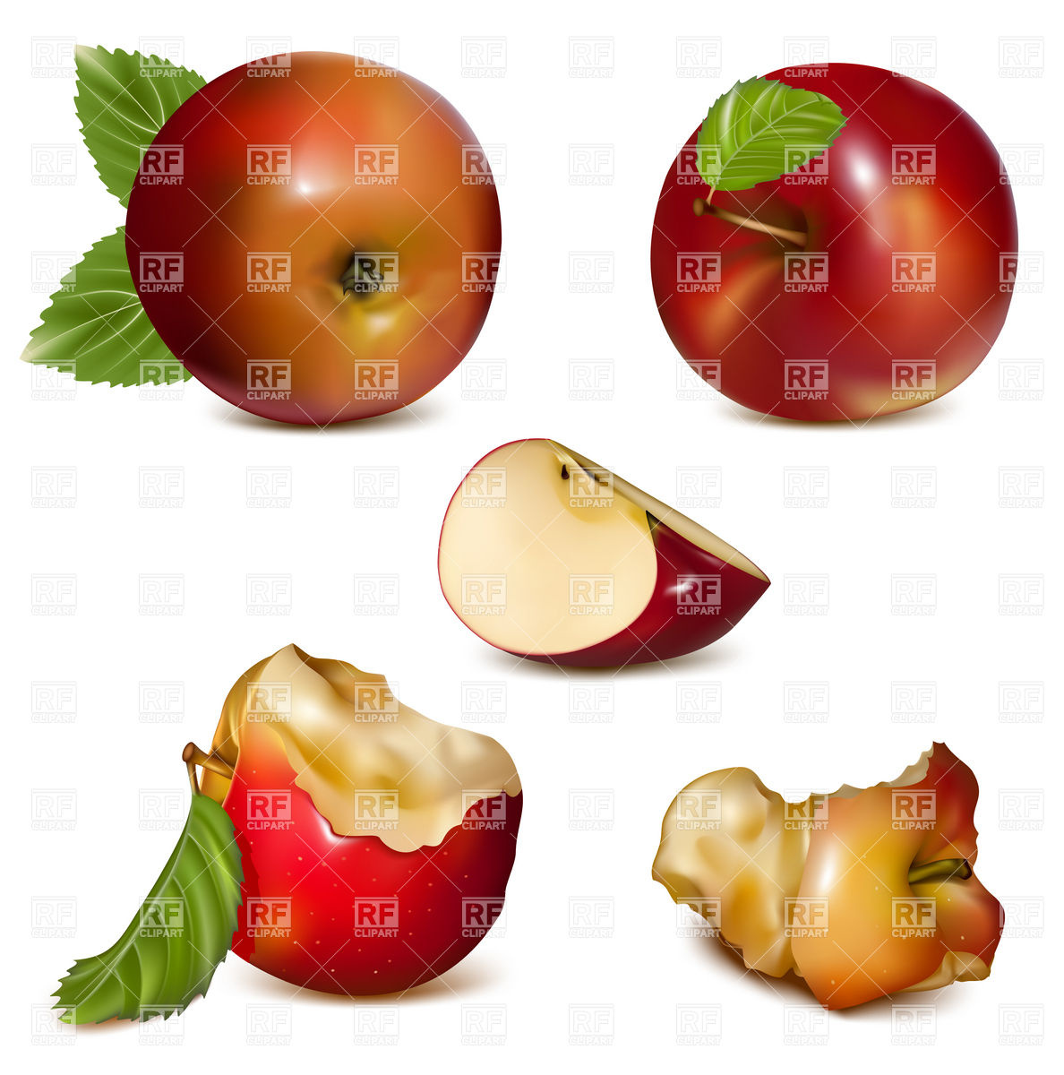 1188x1200 Red Apple Section And Core Of An Apple Vector Image Vector