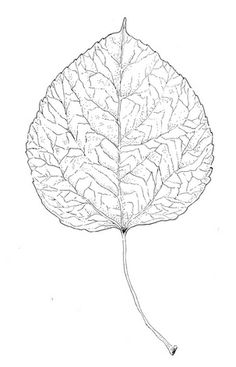 236x367 10 Best Co Stuff... Images Aspen Leaf, Leaf Tattoos
