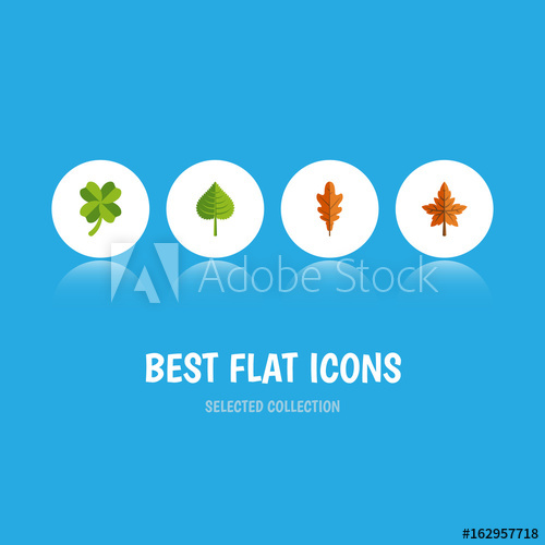 500x500 Flat Icon Leaf Set Of Alder, Hickory, Linden And Other Vector