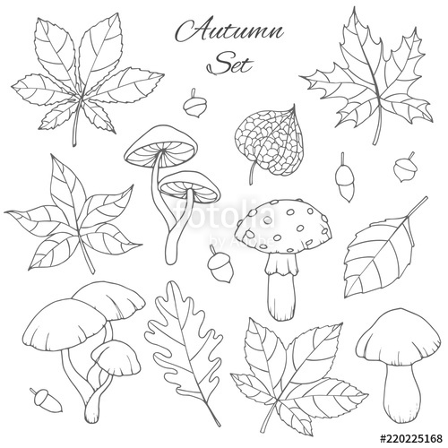 500x500 Hand Drawn Vector Autumn Set With Oak, Poplar, Beech, Maple, Aspen